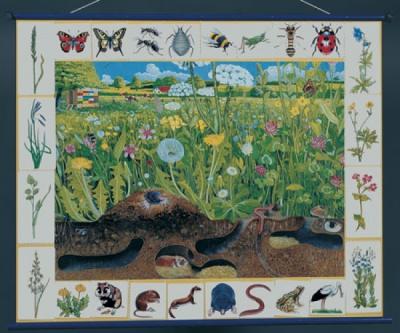 """Магнитный плакат """"Природное сообщество луга"""""""